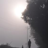 朝霧の散歩
