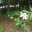 百樹園の花たち