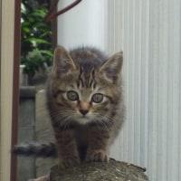 子猫が来ました。