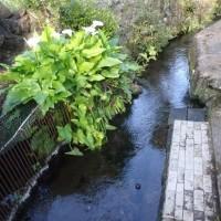 水が温み裏の小川から子どもの声が聞こえる