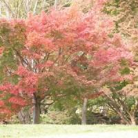 於大公園の紅葉