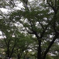 エコ・スクールン in 戸塚北小学校