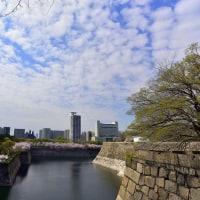 大阪城の桜探訪p5(D810、18-35mm)