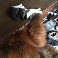 猫の日ということで〜