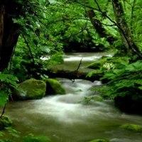 1751 深い森