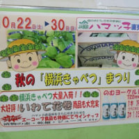 JAの直売所「ハマっ子」は秋の野菜がいっぱいでした♪
