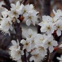 春分の日の長居公園&長居植物園 8 (大阪市)