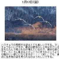 小林義明のNature-Photo_jp