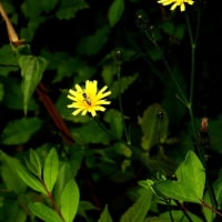 小さな花3