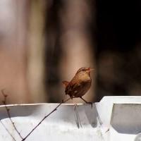 原村の夏鳥 4月25日