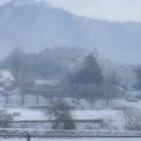 1月21日 朝の雪の様子