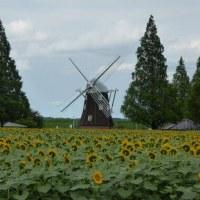 あけぼの山農業公園 向日葵と八重のハス