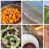 美浜ピクニックラン♪ & 地元農家で醤油絞り体験!のご案内