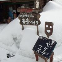Staff weekly 181号 & 日記・・・