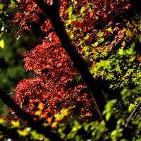 星谷寺の紅葉
