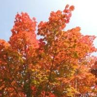 紅葉始まりました