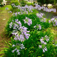 梅雨どきの花