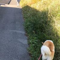 孫と犬の散歩