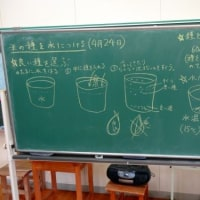 稲の種植え