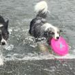 暑いので 水遊び!!