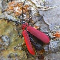 6月に出会った赤い甲虫たち
