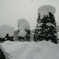今日も雪になりました