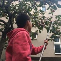 ハゼ釣りと柿の収穫