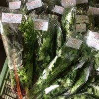 新潟伊勢丹様に野菜が並びました!