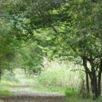秘密の散歩道…秋の収穫コース
