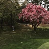 gbdongkimさんinstagram グンちゃんゴルフ(^○^)
