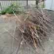 エアコンが壊れたので、枝を燃やしました