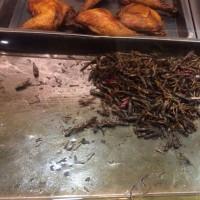 様々な昆虫食