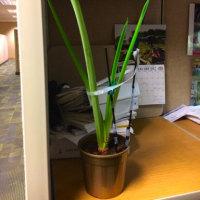 🌸職場の花🌸