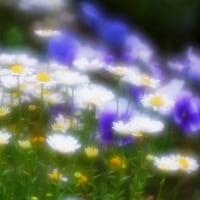 春の花壇  ~Nikonふわっとソフト90mmF4.8