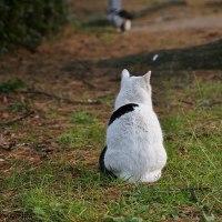 猫ねこ写真展無事終了しました!