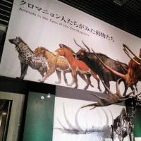 国立科学博物館 ラスコー展&ランチ