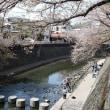 ソメイヨシノ 神奈川 大岡プロムナード