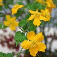 華道展で見た素敵な花