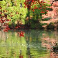 師走の彩り:京都府立植物園