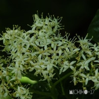 平成29年5月23日(火) 裏山で花見♪