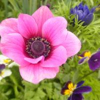 今日も庭の花々のUPです