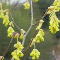 里守の庭にも春が、、、、