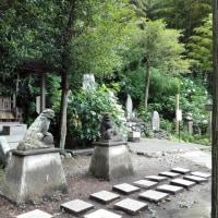 「権五郎神社」はアジサイの名所