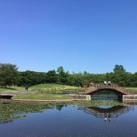 国営みちのく杜の湖畔公園:ポピーまつり開催中