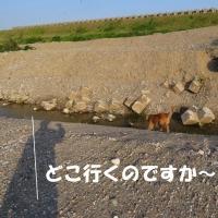 """""""庄川""""で""""カンタ""""と根競べ !!"""