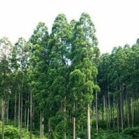 森林保持で増税