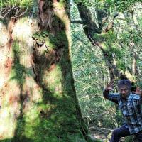 樹齢1000年の大木の身体つくり