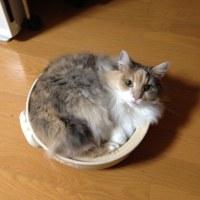 ネコなべ2