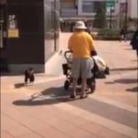 あの犬は?