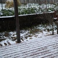 雪がうっすらと積もりました